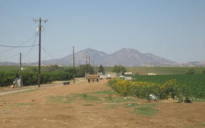 Tamayo Hoffman Farm