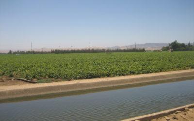Vierra Balfour Farm