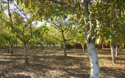 Payne Avenue Farm