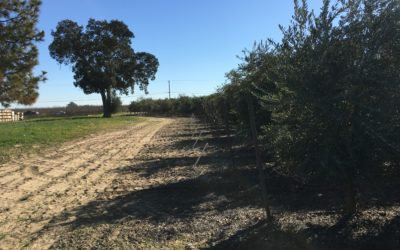 Espinoza Brothers Farm