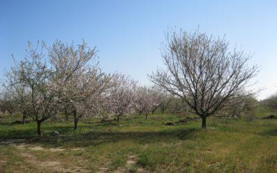 Flora/Graser Farm